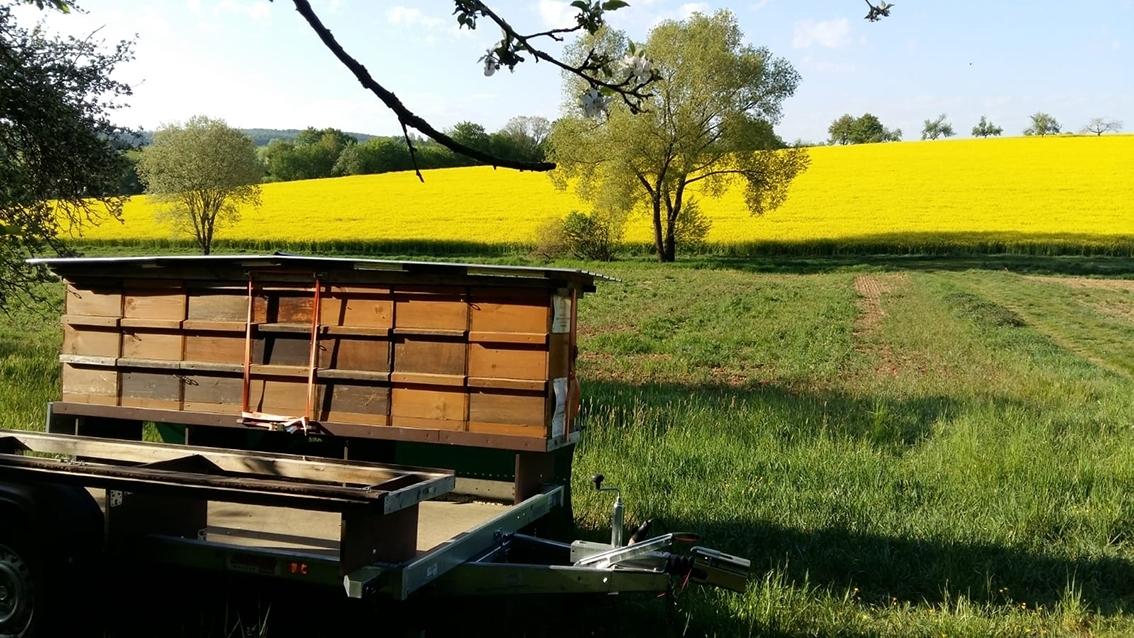 Bienenvolk an der Blühfläche vom Hofgut Bayha